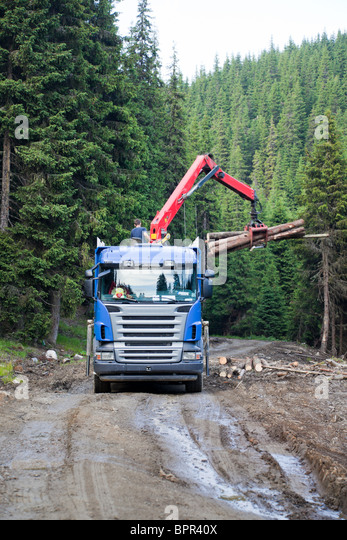 Truck loading wood in the forest, Romania. - Stock-Bilder