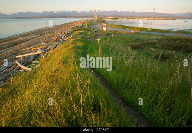 Tall grass and trail along Goose Spit, a popular destination in Comox, Comox Valley, Vancouver Island, British Columbia, - Stock Image