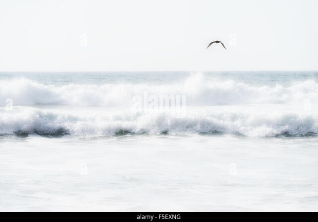 Sea waves with flying seagull. - Stock Image