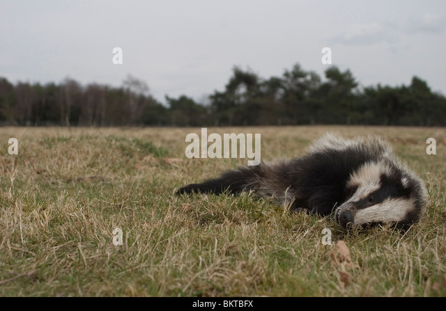 Weiland Stock Photos & Weiland Stock Images - Alamy