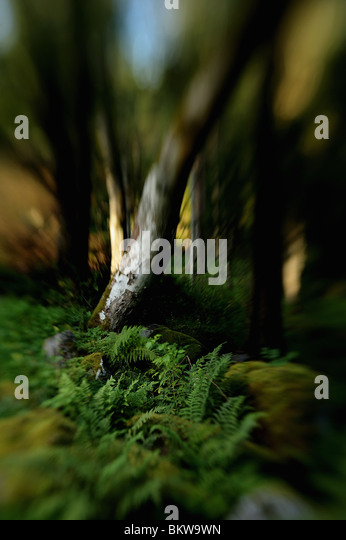 Vegetation in wood glide - Stock Image