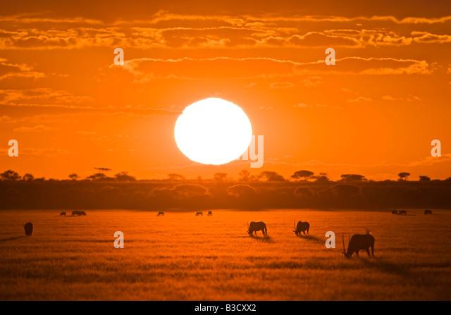Africa, Botswana, Silhouette of gemsbok herd (Oryx gazella) at sunset - Stock-Bilder