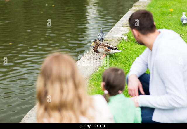 Duck Pond Child Stock Photos Duck Pond Child Stock