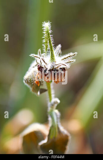 Decayed flower , Nature, Flower, Abstract, Garden, Dried flower, Plant senescence - Stock Image