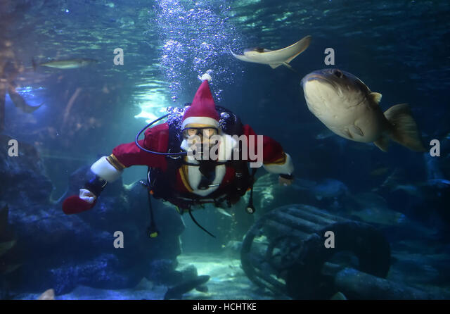 Berlin, Germany. 9th Dec, 2016. Head aquarist Martin Hansel feeds fish while wearing a Santa Claus costume during - Stock Image