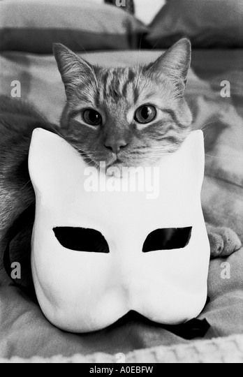 Home cat posing with a cat mask - Stock Image