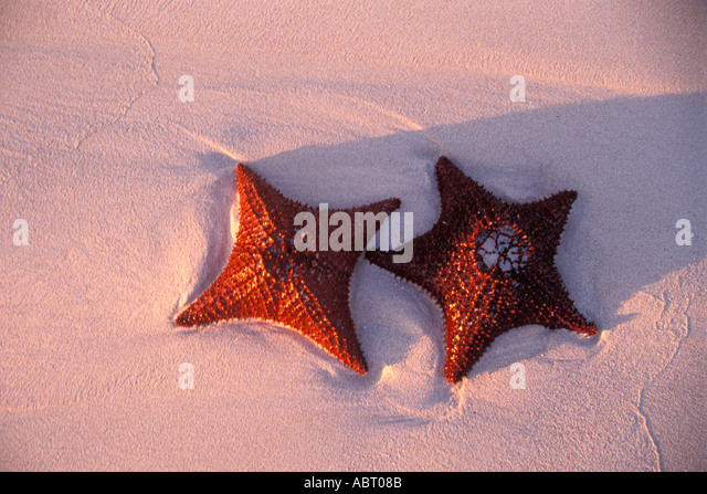 Two starfish on the beach near sunset moody and romantic - Stock Image