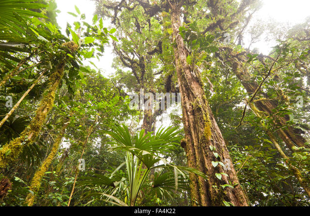 Cloud forest inside Altos de Campana national park, Republic of Panama. - Stock-Bilder