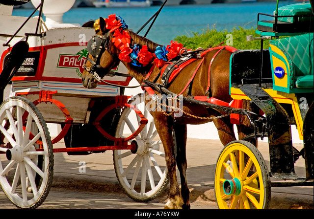 Cozumel Mexico San Miguel town Malecon horse drawn carriage - Stock Image