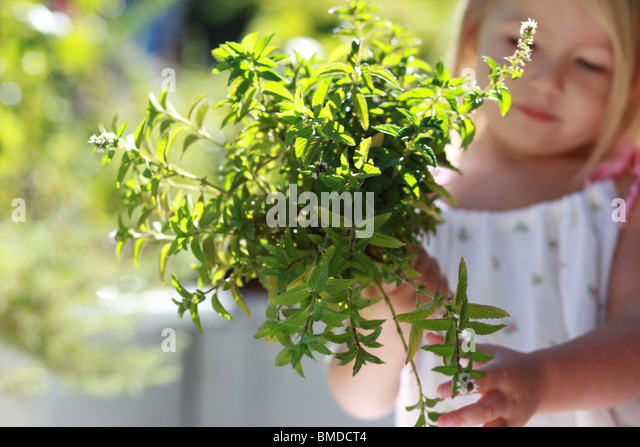 Young girl holding bunch of green plants - Stock Image