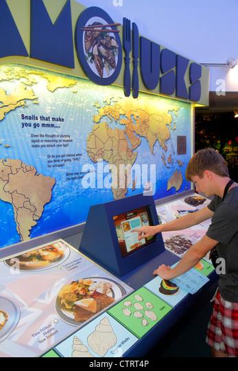 Sanibel Island Florida Sanibel Bailey-Matthews Shell Museum exhibit information display mollusks teen boy touchscreen - Stock Image