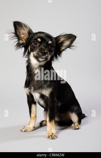Dog sitting down, portrait - Stock Image