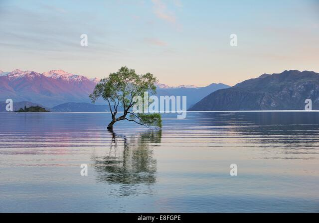 New Zealand, Otago, View of Lake Wanaka - Stock Image