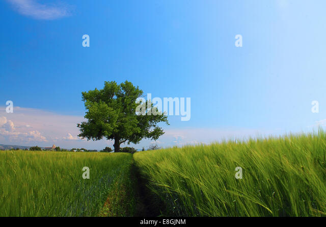 USA, Idaho, Bonneville County, Idaho Falls, Tree in a field, Idaho Falls, Idaho, America, USA - Stock Image