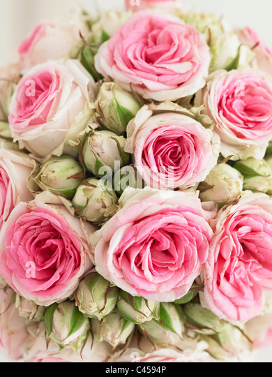 Pink rose bouquet, close-up - Stock Image