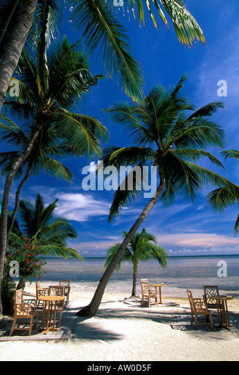 Tables under palm trees on tropical beach florida keys iconic image - Stock Image