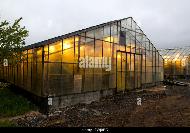 illuminated greenhouses heated by geothermal energy for growing tomatoes Hveragerdi iceland - Stock Image