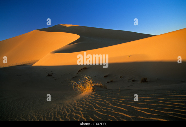 Algeria, Djanet, Sahara dessert, plant surviving in sand. Sand dunes. - Stock Image