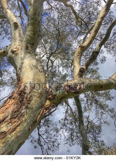 close up Tree - Stock Image