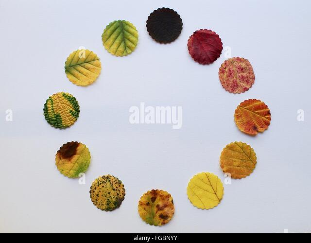 Directly Above View Of Leaves On White Background - Stock Image