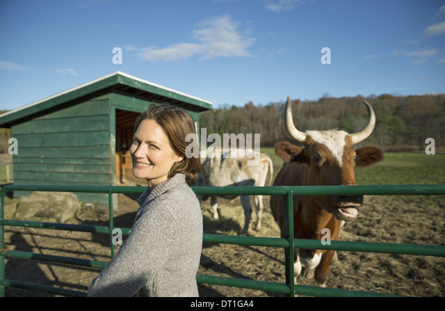 Animal sanctuary A woman beside the fence feeding two cows - Stock Image