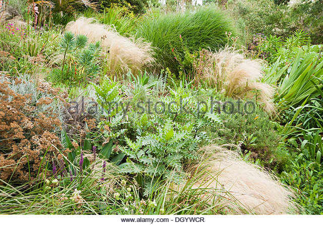 Acanthus garden stock photos acanthus garden stock for Grasses planting scheme