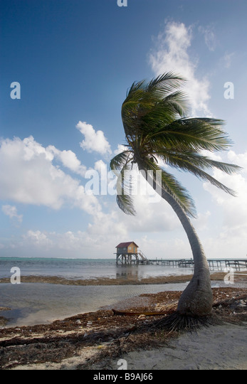 Coconut Palm Thatch Stock Photos Amp Coconut Palm Thatch