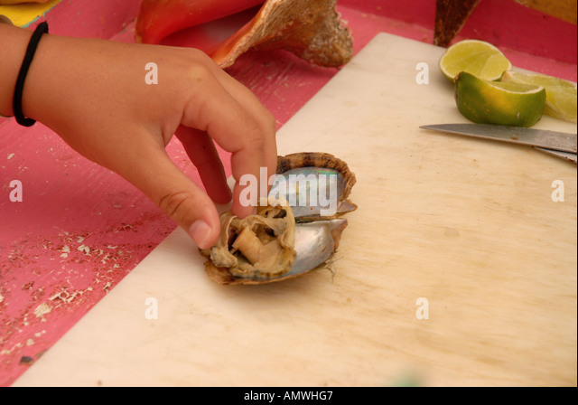 Bahamas cultivated pearl oyster Pearl Island snorkel treasure hunt Nassau - Stock Image