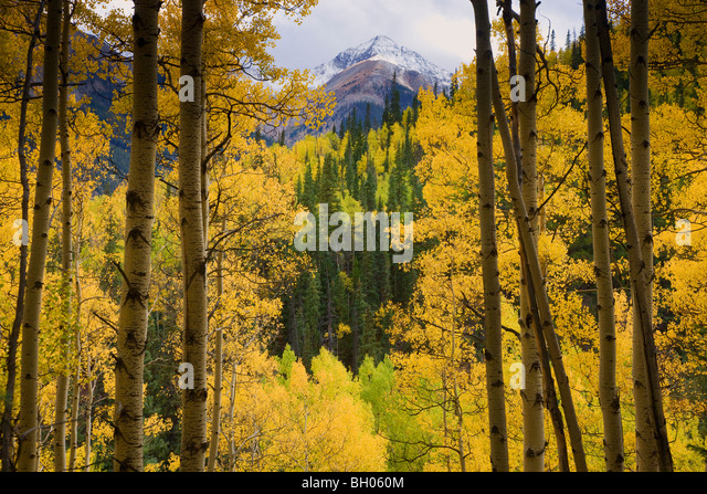 Fall colors along Henson Creek Road to Engineer Pass, San Juan Mountains, Colorado. - Stock Image