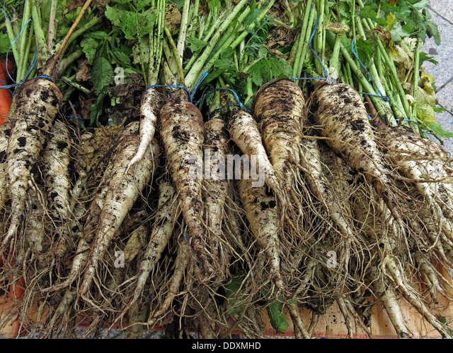 Dirty Organic Parsnips on sale at Farmers Market, Warrington, Cheshire, England, UK - Stock Image