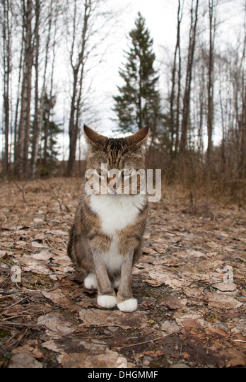 Cat in the forest - Stock Image