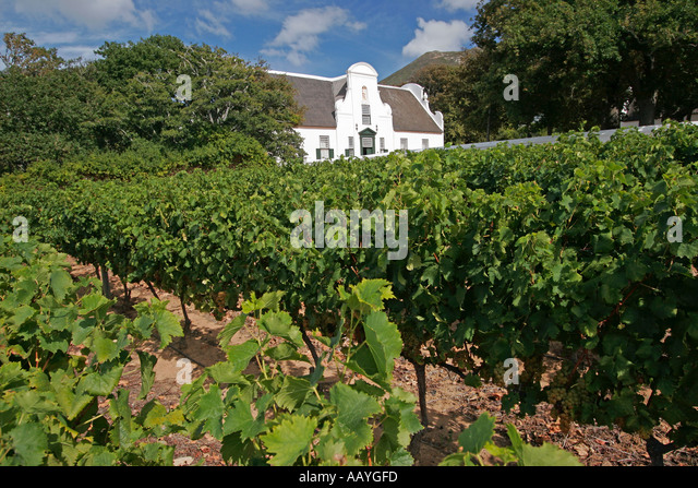 south africa cape town little constantia winery vineyard - Stock Image