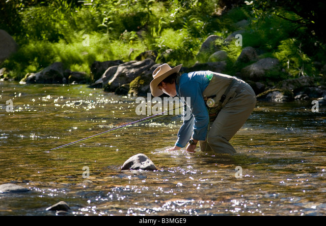 Local resident fly fishes for trout catches and releases a rainbow on Gore Creek Vail Colorado in August - Stock Image
