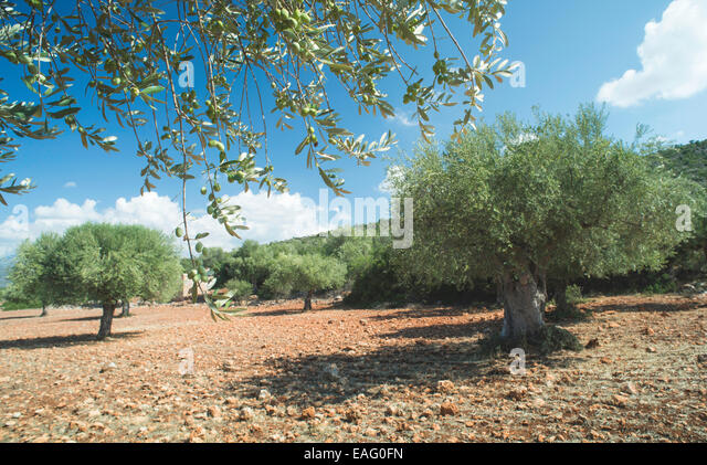 Plantation Branches Stock Photos Plantation Branches Stock Images Alamy