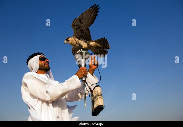 United Arab Emirates UAE Abu Dhabi Province Beduin culture falconry - Stock Image