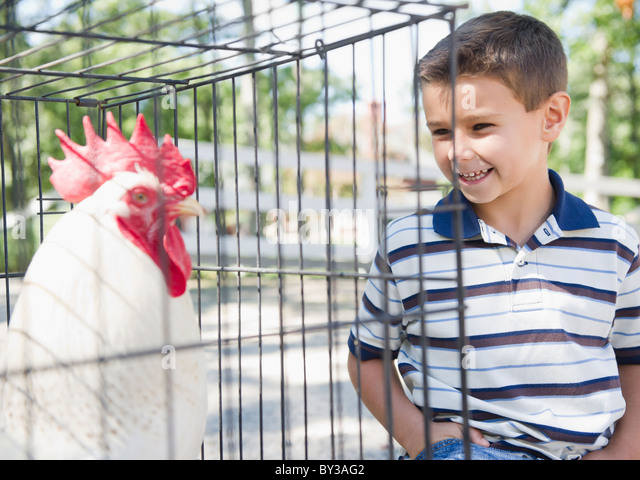 USA, New York, Flanders, Boy (8-9) standing in front of cage with rooster - Stock Image