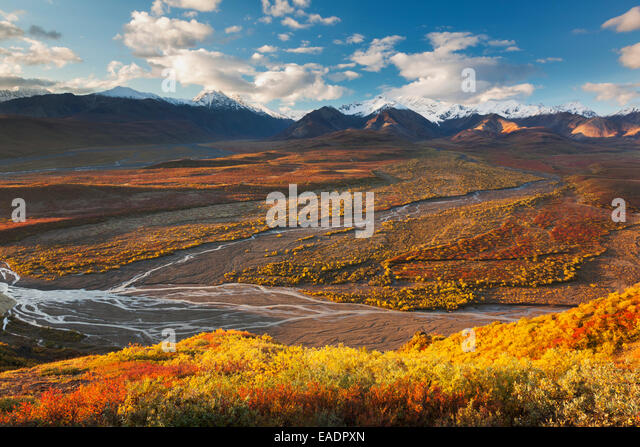 Alaska,Polychrome Pass,Dwarf Birch,Denali Np - Stock Image