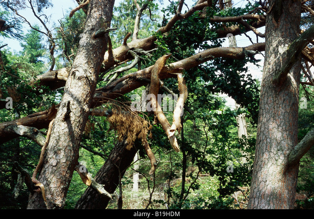Fallen Branch Of Tree Stock Photos & Fallen Branch Of Tree ...