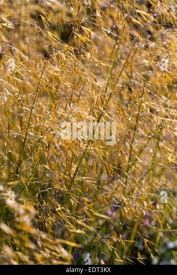 Ornamental grass border stock photos ornamental grass for Ornamental grass border