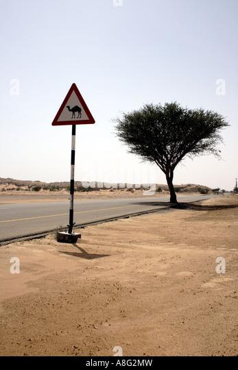 Dubai camel xing. Photo by Willy Matheisl - Stock Image