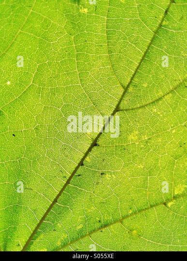 green leaf texture - Stock-Bilder