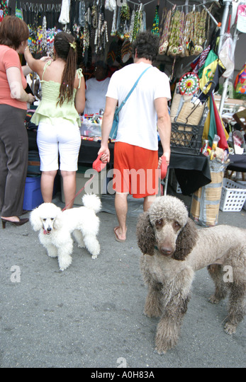 Coconut Grove Florida Grand Avenue Bahamas Goombay Festival man holds dogs poodles pets leash vendors - Stock Image