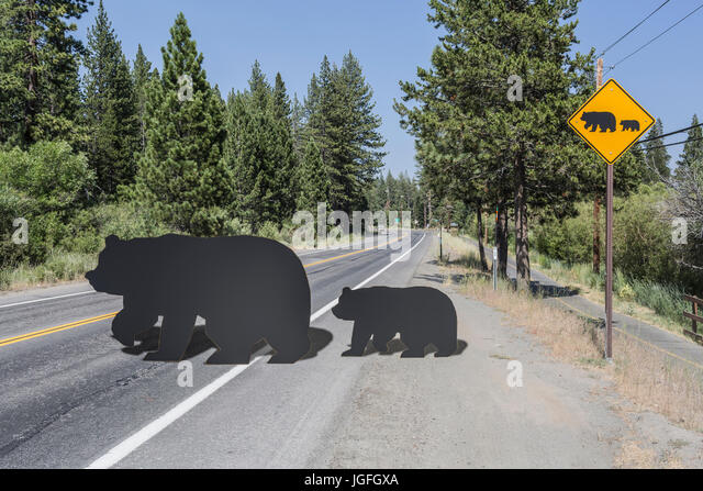 Cut outs of bear and cub crossing street near caution sign - Stock Image