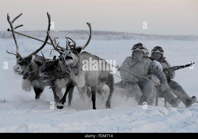 Murmansk Region, Russia. 1st February, 2016. Reconnaissance unit members of the Northern Fleet's Arctic mechanised - Stock Image