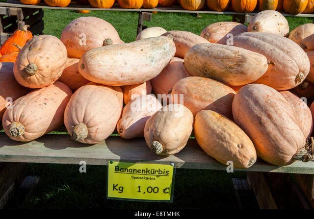 Banana Squash, - Stock Image
