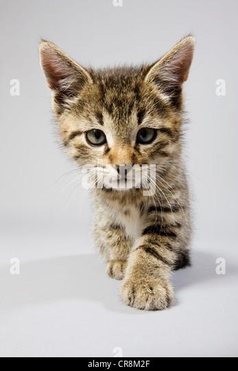 Cute kitten - Stock Image