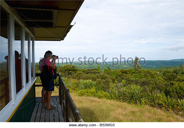 Tourists at the Waipoua Kauri Forest lookout, North Island, New Zealand - Stock Image