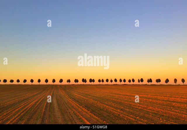 Avenue from the young trees between the fields at sunrise - Stock-Bilder