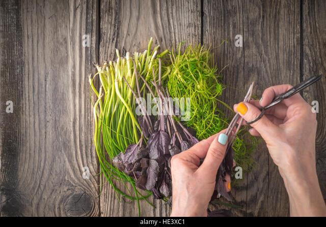 Woman prepares village fresh herbs horizontal top view - Stock Image