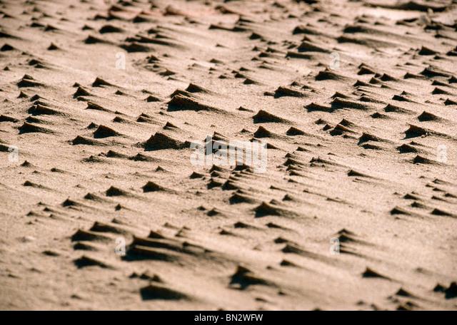 WIND BLOWN SAND BEACH UK - Stock Image